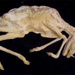 Un fósil demuestra que los unicornios habitaron hasta hace sólo 29 mil años