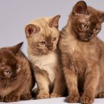 El duelo de una cobra rodeada por cuatro gatos se hace viral en la Red